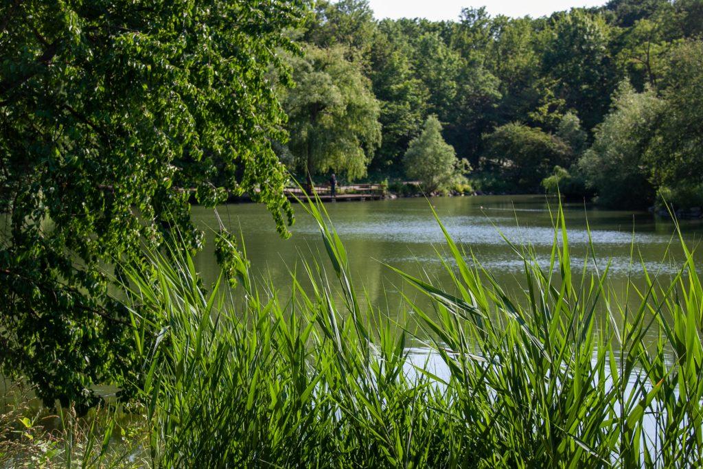 Der Filmteich im Kurpark Oberlaa - mit schattigen Terrassen zum Picknicken.