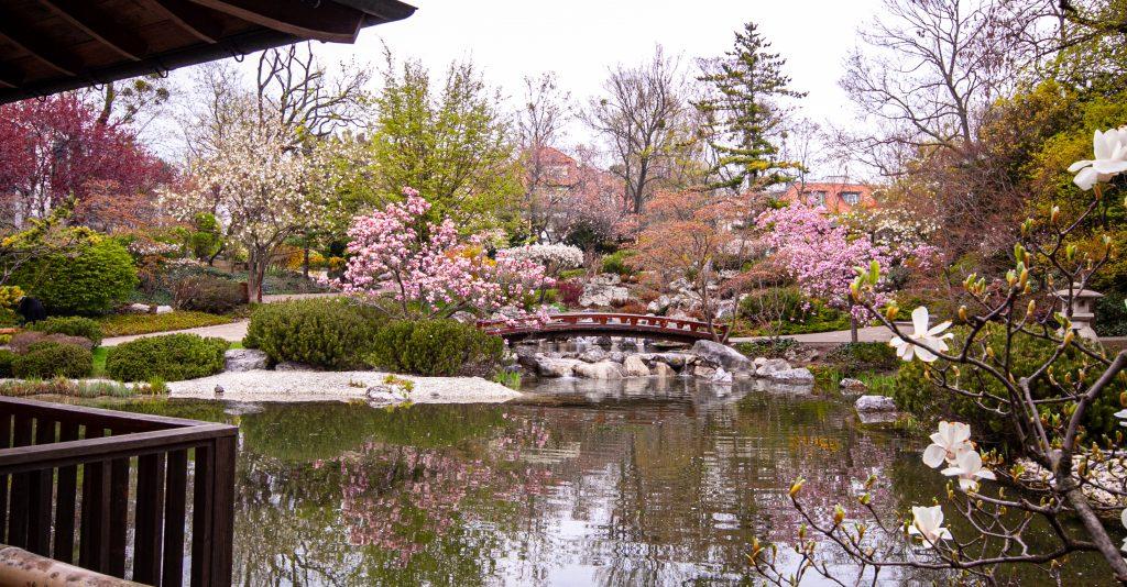 Ansicht vom Setagaya-Park vom Teehaus aufgenommen - in voller Blüte im Frühling.