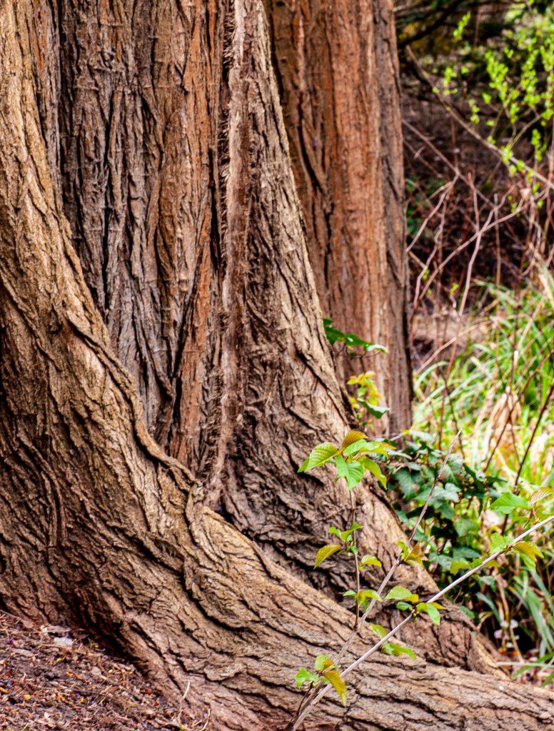 Der Baumstamm erinnert uns an die Wichtigkeit von Erdung und Verwurzelung.